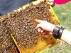 Bienen Seminar - 12