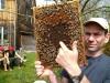 Bienen Seminar - 10